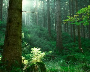thuringian_forest1