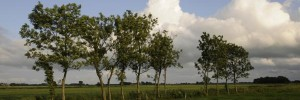aurich meadow